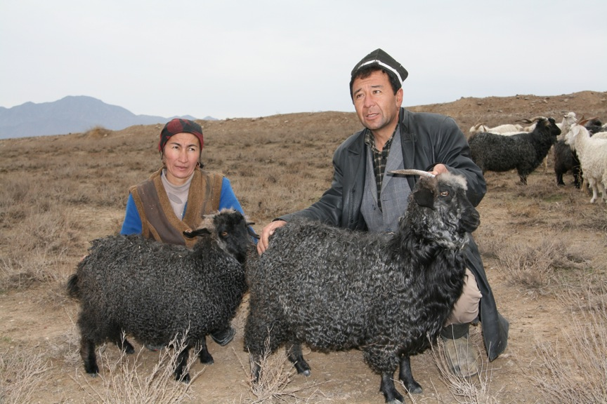 Tajikistan shepherds show off their colored angora goats. Photos Courtesy of Marilyn Murphy